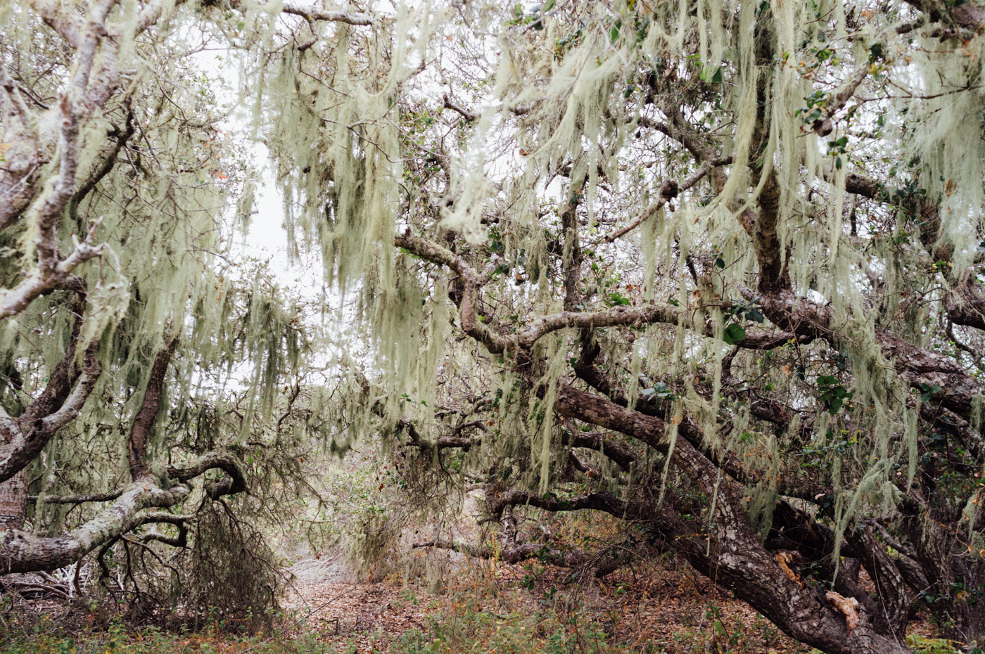 The eerie beauty of the moss covered - Elfin Forest - Let's Photo Trip