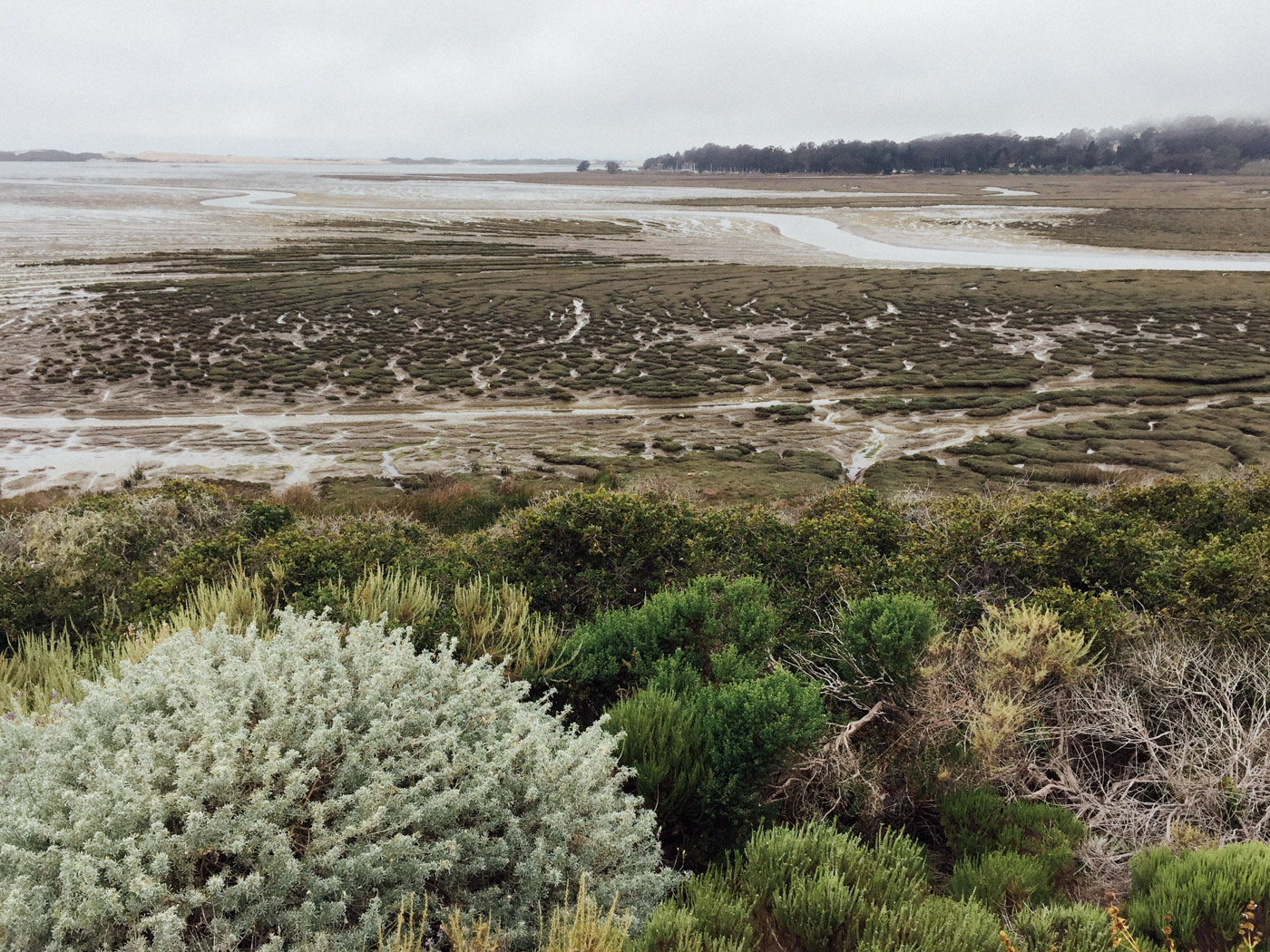 Looking across the Morro Bay estuary - Elfin Forest - Let's Photo Trip