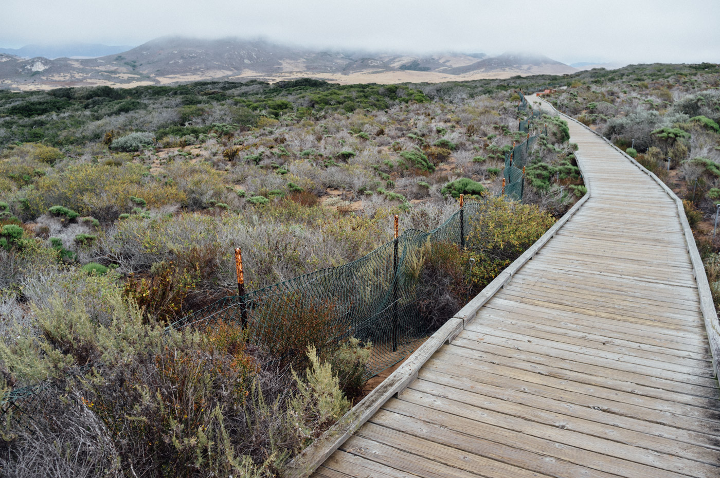 A wooden foot path leads you through the forest - Elfin Forest - Let's Photo Trip