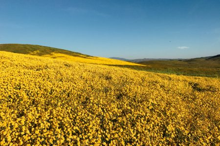 Carrizo Plain & The Super Bloom