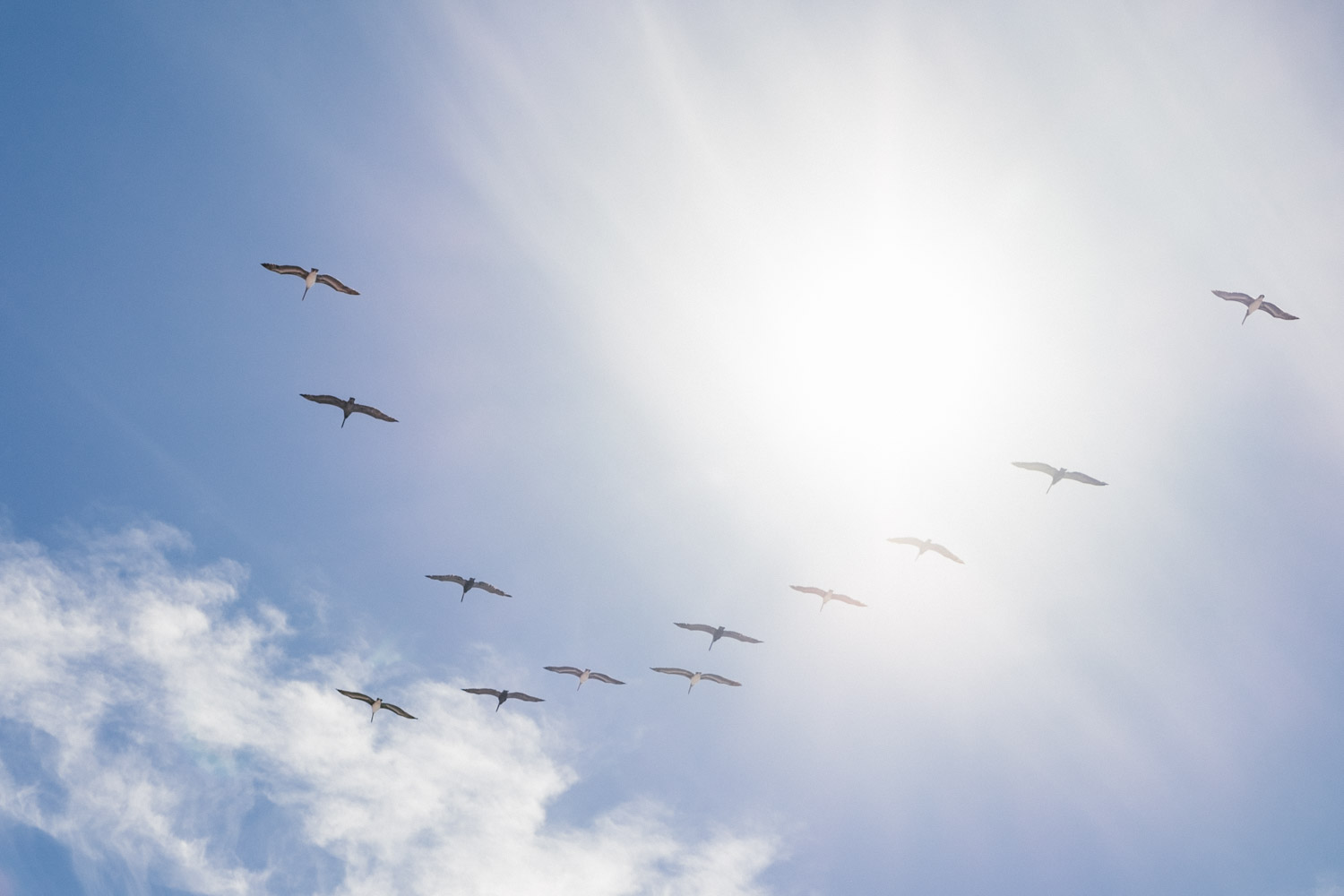 Birds in formation. Jalama Beach - Let's Photo Trip